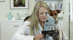 Vet looking through microscope with dog watching Stock Footage