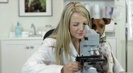 Stock Video Footage of vet looking through microscope with dog watching