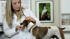 Vet cleaning dogs ears Stock Footage