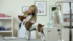 Vet checks dogs ears dolly movement Stock Footage
