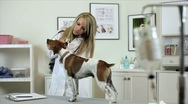 Stock Video Footage of vet checks dogs ears dolly movement