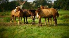 Four horses grazing in the meadow Stock Footage