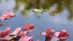 Leaves in water - stock footage