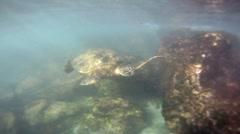 Green Sea Turtle 02 Stock Footage