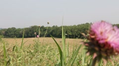 Pink flower and farm field Stock Footage
