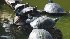 Family of Turtles - stock footage