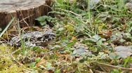 Toad (3/6) Stock Footage