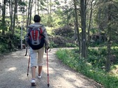 Stock Video Footage of Woman nordic walking in the park, forest, dolly shot NTSC