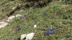 Alpine Mountain Flora 3 Stock Footage