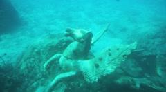 Underwater Pegasus - stock footage