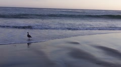The beaches of Southern California - Laguna Beach Stock Footage