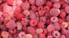 Lot of raspberries yield panning background Stock Footage