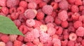Lot of raspberries with green leaf panning background Footage