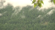 Stock Video Footage of Temperate Rainforest of Evergreen Trees Exhales Misty Clouds and Fog (timelapse)