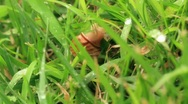 Snail in the grass. Timelapse. Stock Footage