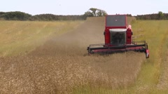 Red combine harvester cutting a row of rape seed - long shot - head on Stock Footage