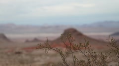 Desert Bush Rack Focus Stock Footage