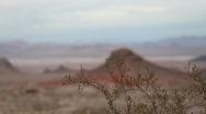 Desert Bush Rack Focus Stock Footage
