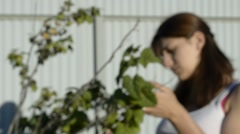Young woman collects blackcurrant Stock Footage