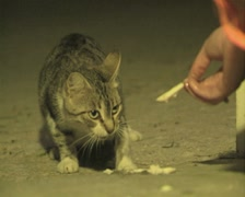 Close up of stray cat being fed Stock Footage