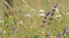 Wind playing with wildflowers in the high green grass Stock Footage
