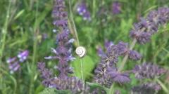 Little snail Stock Footage