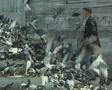 Man feeding pigeons on steps Footage