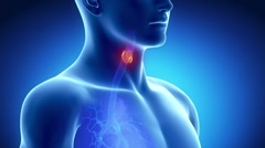 Detailed view - Male THYROID anatomy in x-ray Stock Footage