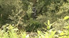 Hiawatha and Minnehaha Statue wide at Minnehaha Falls Stock Footage