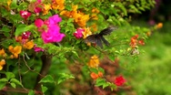 Beautiful Butterfly on Flowers, Colorful Wings, Great Nature Stock Footage