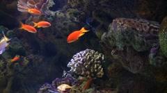 Underwater Ocean Tropical Reef 20 Tropical Fish - stock footage