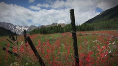 (1266) Aspen Colorado Wilderness Mountain Meadow Wildflower Timelapse - stock footage