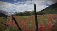 (1266) Aspen Colorado Wilderness Mountain Meadow Wildflower Timelapse Stock Footage