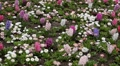 Beautiful Field of Flowers in Spring Season Footage