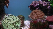 Stock Video Footage of Underwater Ocean Tropical Reef 30 Tropical Fish