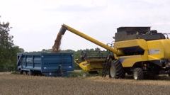 Yellow combine harvester loading wheat into a trailer Stock Footage