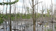 Stock Video Footage of Swampy waters