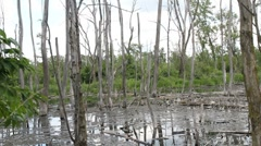 Stock Video Footage of Swampy water