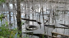Swamp Water Stock Footage