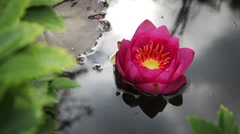 Pink Waterlily Stock Footage