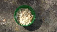 GALLERIA MELLONELLA larves Stock Footage