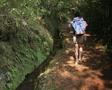 Hiker walking along woodland path Footage