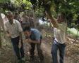 Men picking grapes Footage