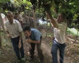 Men picking grapes Footage