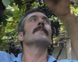 Close up of man's face as he picks grapes SD Footage
