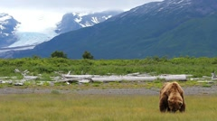 Katmai National Park Bear Scenic Stock Footage