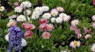 Stock Video Footage of Beautiful Field of Flowers in Spring Season