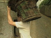 Men carrying baskets full of grapes Stock Footage