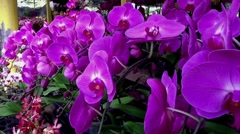 Purple Orchids Stock Footage