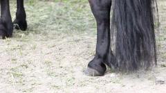 Pony legs Stock Footage